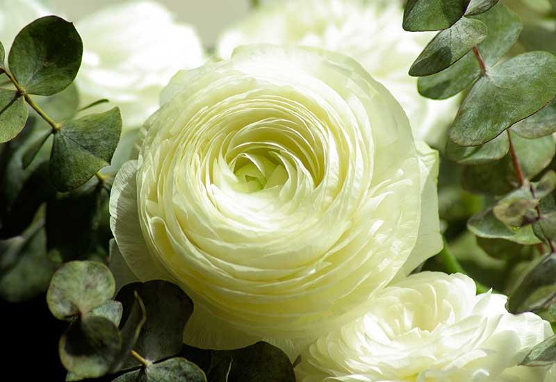 گل آرایی