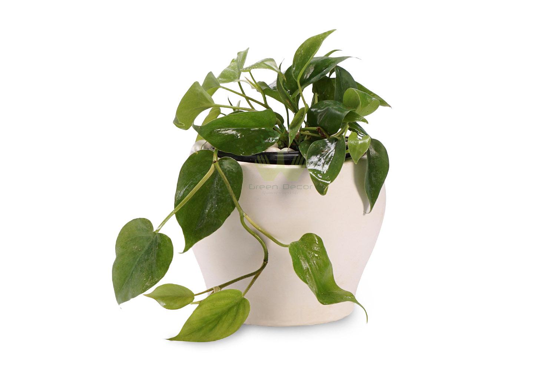 گیاهان آپارتمانی تصفیه کننده هوا