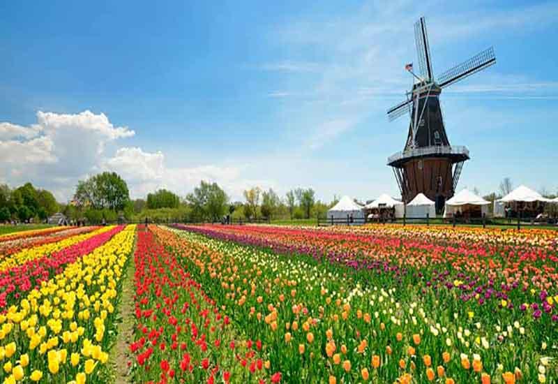 جشنواره های گل آمریکا