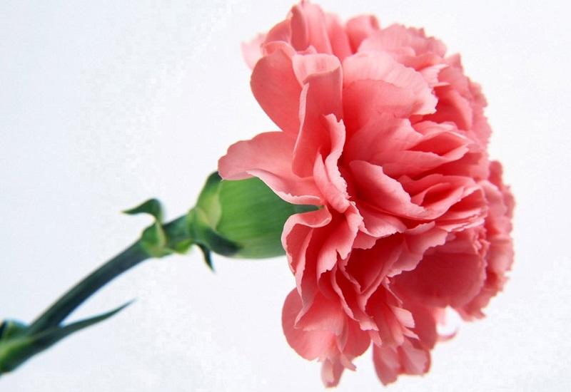 معانی گل های مختلف
