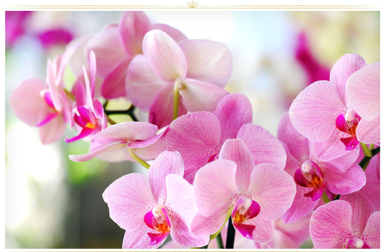 ارکیده (Orchidacea)